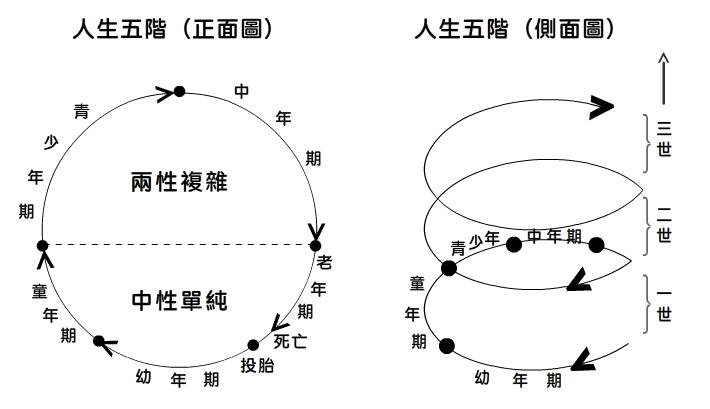 人生五階(正側面圖)