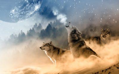 Winterwolf Press Launches New Website