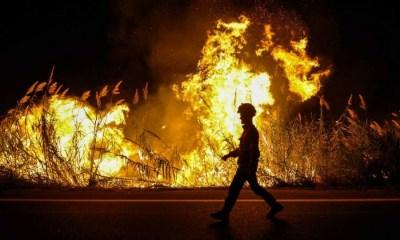 Incendios en Portugal, Portugal