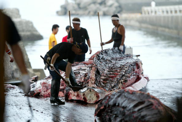 Pese a protestas, Japón seguirá con la caza de ballenas 51105890