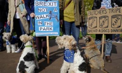 Perros protestan contra el Brexit