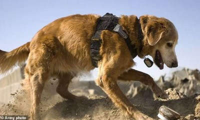 Perros robots podrían remplazar a canes rastreadores