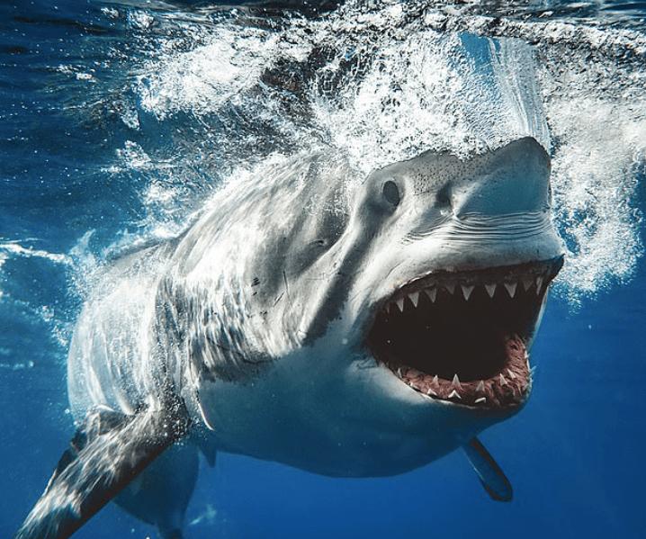 Jaws de la vida real: captura la imagen de un gran tiburón blanco Captura-de-pantalla-2019-05-03-a-las-17.53.16