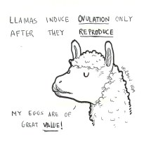 science, curious, curiosity, fun, funny, humor, llama, ovulation, reproduction