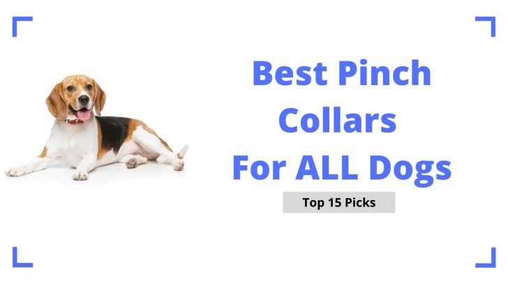 Best Pinch Collars For Dogs