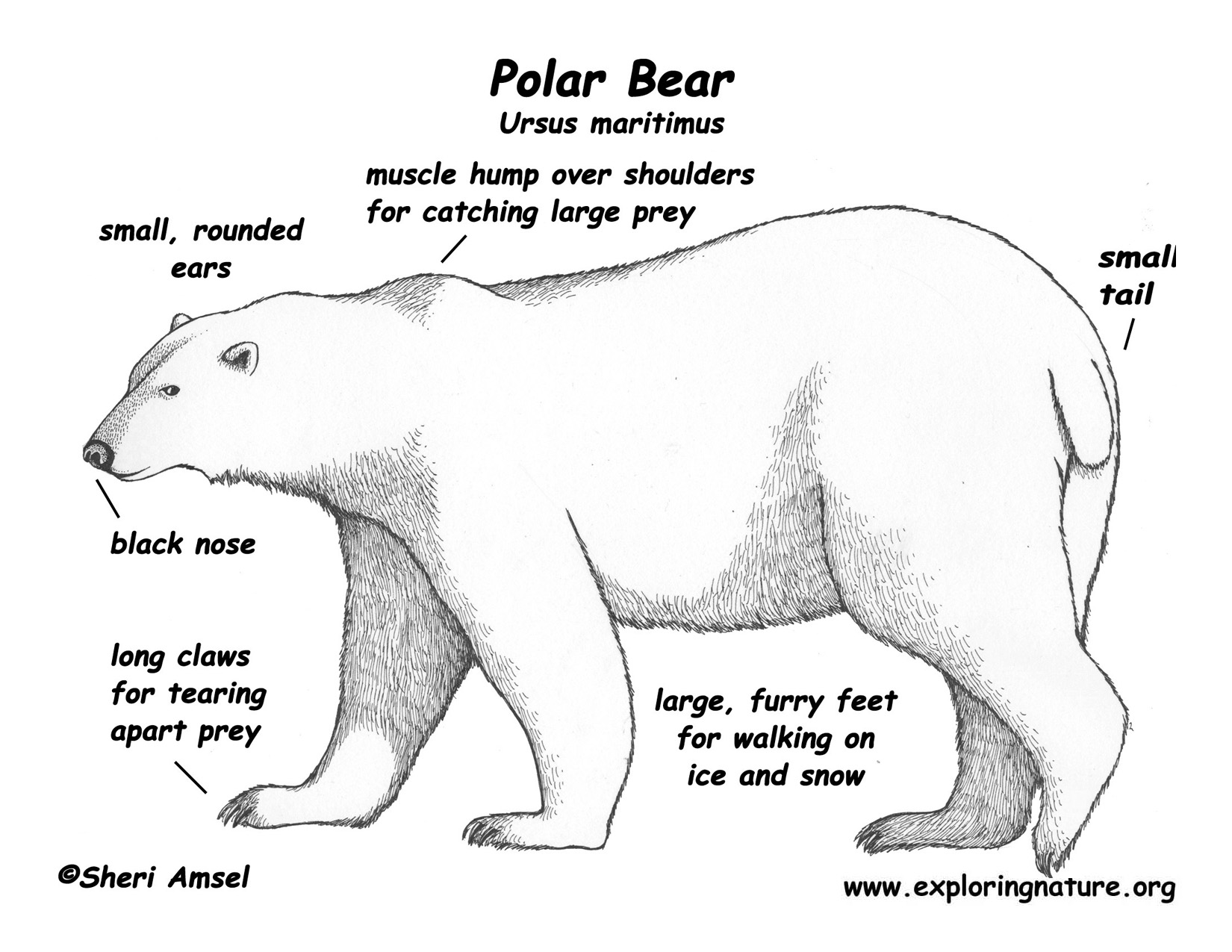 Polar Bear Water Distiller Wiring Diagram