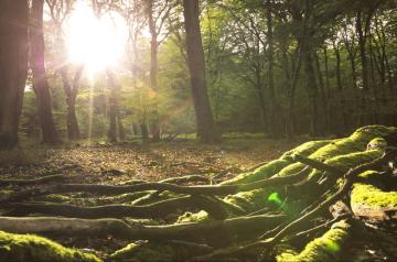 Die Wanderung der Alten Buchenwälder