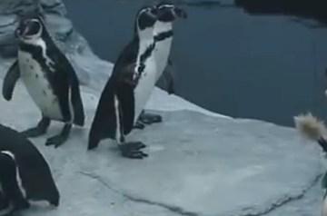 Jaques entdeckt… …was machen eigentlich Pinguine den ganzen Tag?