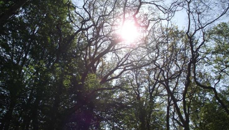 Naturenergien: Das dreifache Gold der Insel Rügen