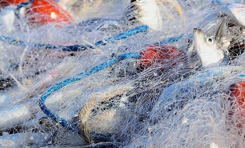 Volle Netze, leckere Gerichte, zufriedene Gäste: Erste Rügener Fisch(er)tage erfolgreich abgeschlossen