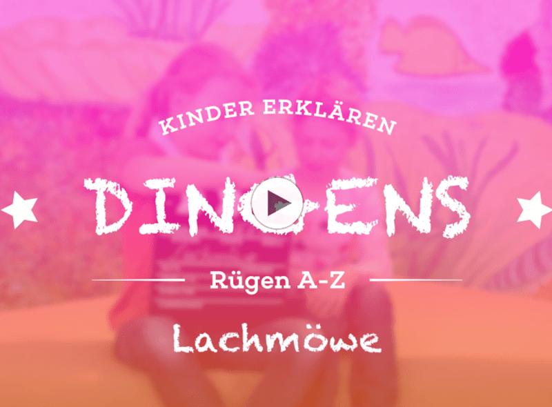 """""""Dingens – Rügen von A bis Z"""": L wie Lachmöwe"""