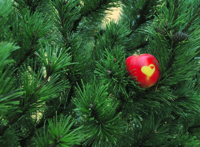 """Am 17. Dezember ist wieder """"Lüttenweihnachten"""" im Biosphärenreservat Südost-Rügen"""