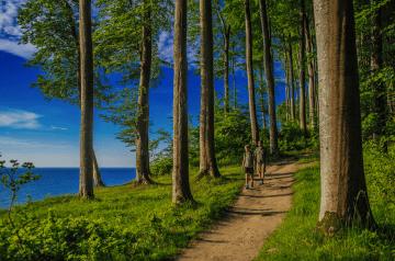 Wandern auf Rügen – Das Meer im Blick, der Strand zu Füßen, der Wald so nah. . .
