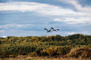 Auge in Auge mit den Vögeln des Glücks