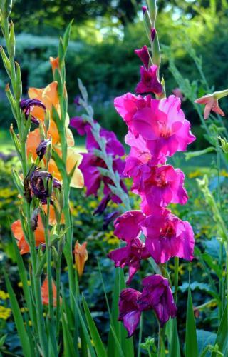 orange-pink-flowers