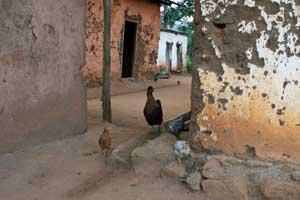 Yamba: Hühner zwischen den Häusern