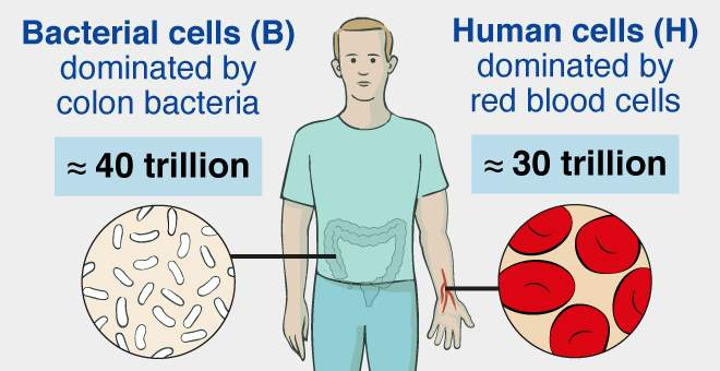 Diagram Of Germs Germs Humans And Numbers Life Sciences Weizmann