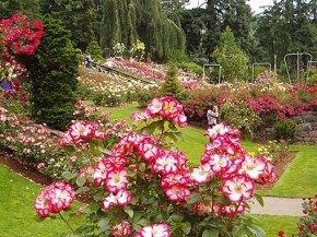 Aneka bunga kebun Raya Cibodas