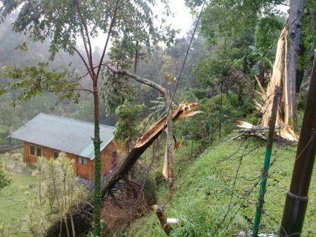 pohon tumbang cuaca ekstim mandalawangi cibodas