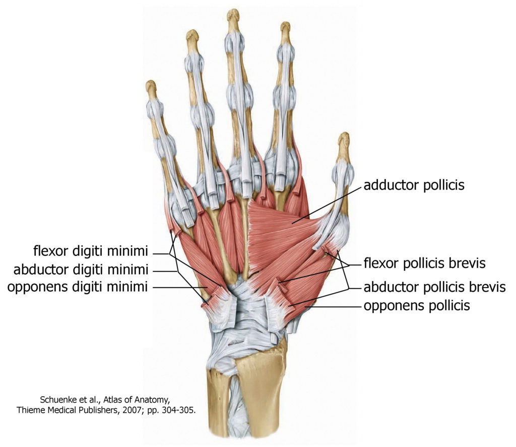 outside tendon hand diagram corsa c radio wiring intrinsic muscles of the  mind and motion anatomy
