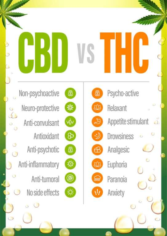 thc vs cbd chart showing the differences