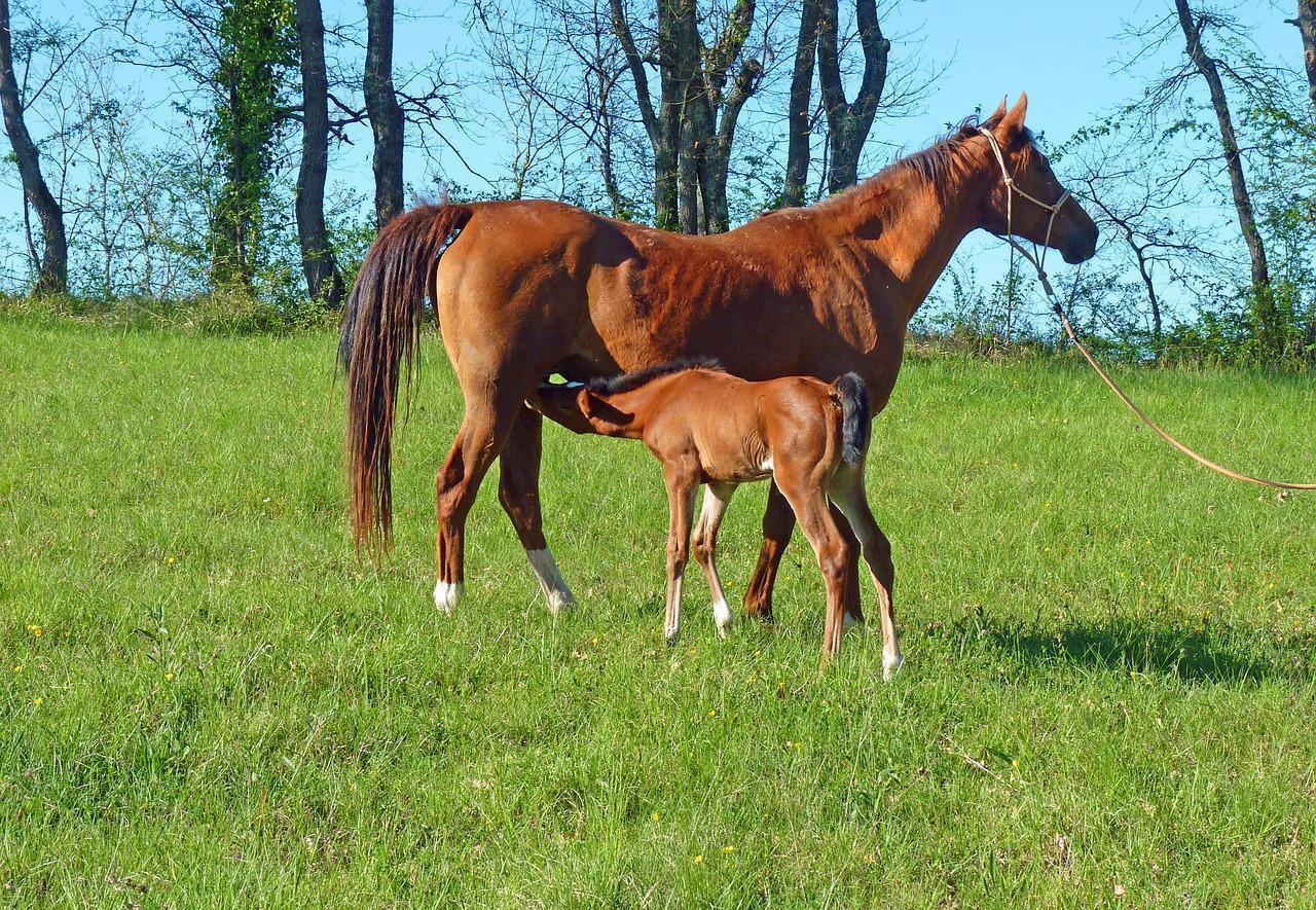 Wisconsin Horse Land For Sale 500K To 1 Million WI Horses