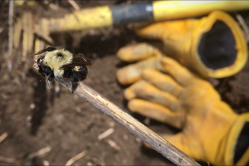 Bumble Bee on a stick with tools and gloves in background