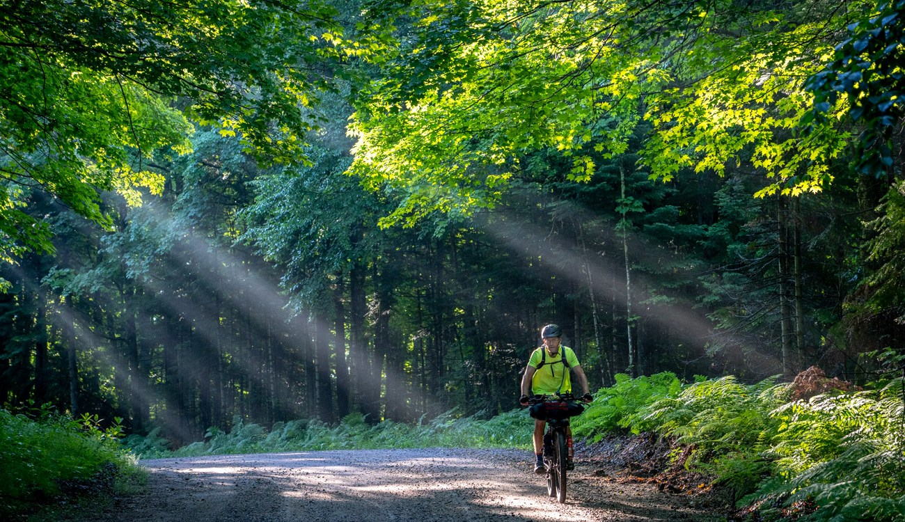 Man rides through forest with dramatic light