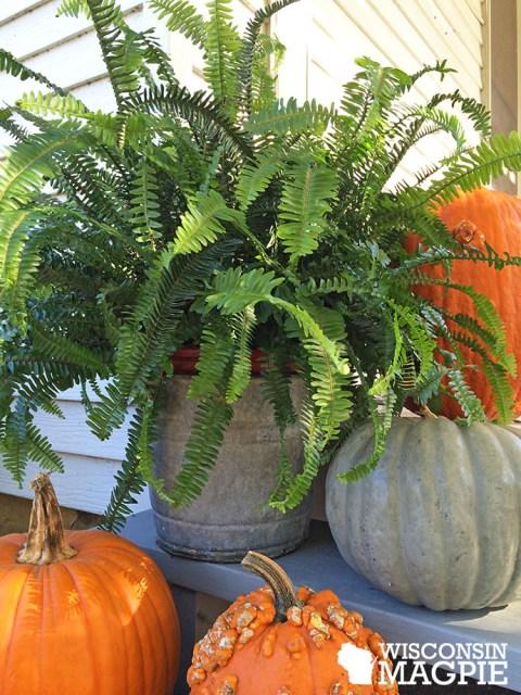 fern with pumpkins