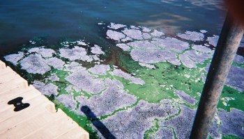 Algae blooms on Lake Kegonsa in 2010.