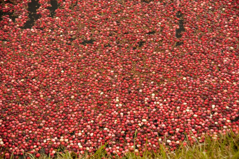 The world's No. 1 producer, Wisconsin harvested a record 6 million barrels of cranberries in 2013 — a 25 percent jump from 2012