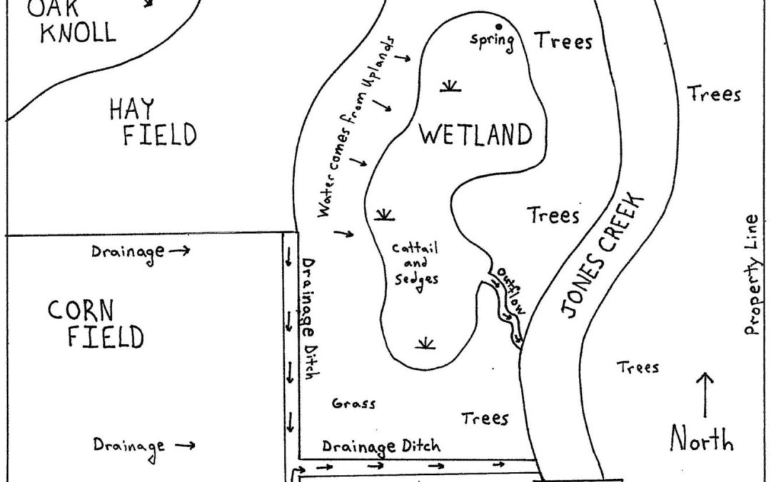 Get to know your wetland by creating a base map