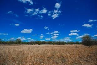 Dry Prairie / Barrens
