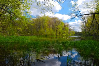 Pond & Forest