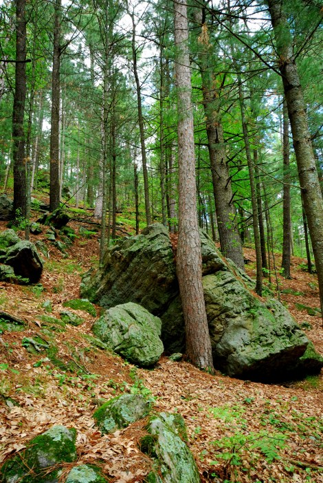 Rocky Forestscape