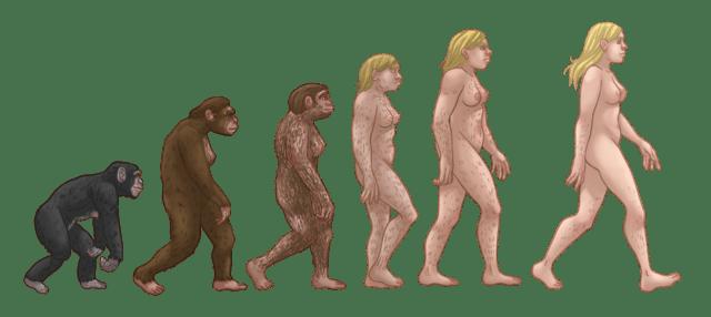 concept maps of pre-history   evolution