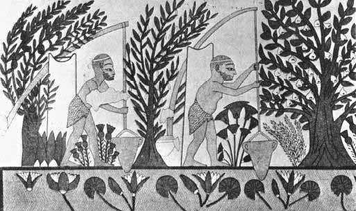 Roman Egypt | economy