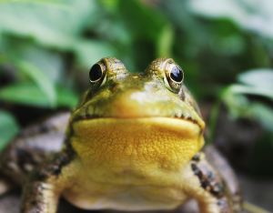 frog's face