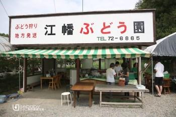 日本茨城常陸太田市採果體驗。常陸太田ぶどう部會江幡茂葡萄園