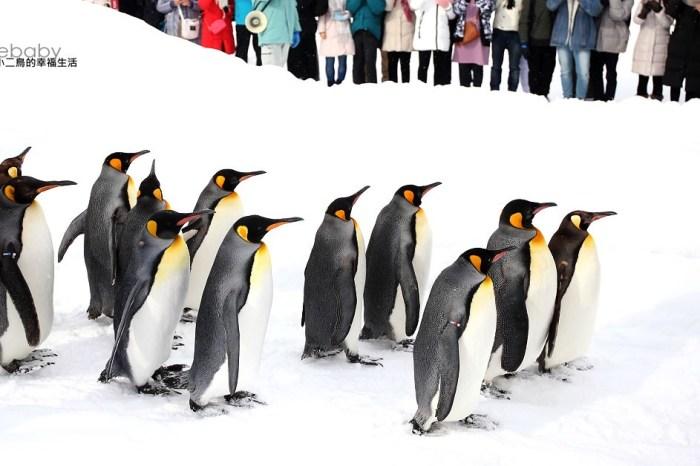 北海道推薦景點。旭山動物園 冬天必看企鵝散步