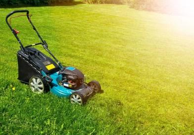 5 Lawn Maintenance Tips