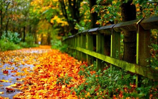 autumn-leaves-on-road-hd-for-desktop-widescreen-wallpaper-download