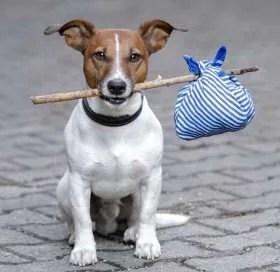 rehome-dog
