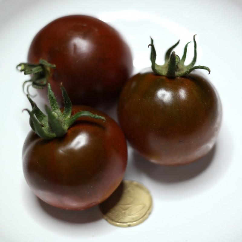 pomodoro-nero-semi-pomodorino-black