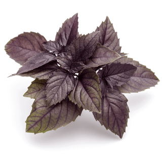 basilico rosso semi online