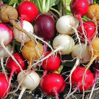 ravanelli colorati mix semi