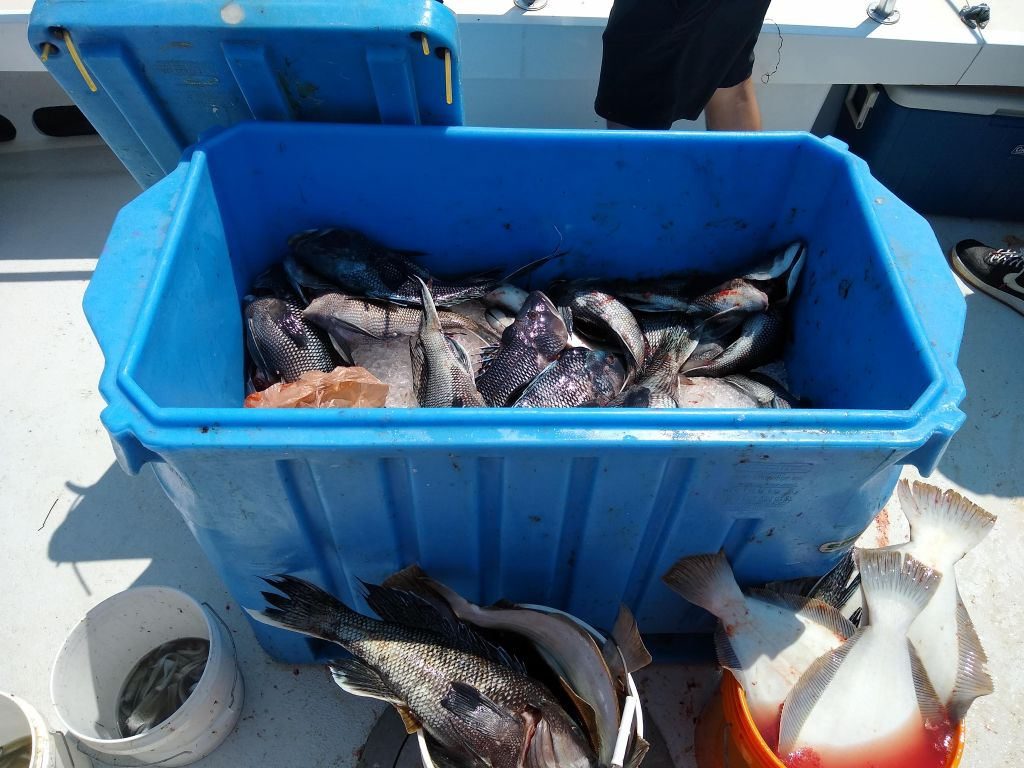 Tote of fish on Laura Ann