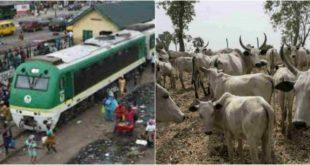 Train Crushes 52 Cows To Death In Kaduna