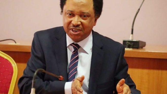 Shehu Sani Reveals What Buhari Should Do With Obasanjo's Letter