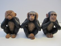 Monkey Wise Monkeys